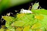 Insektizide & andere Spritzmittel