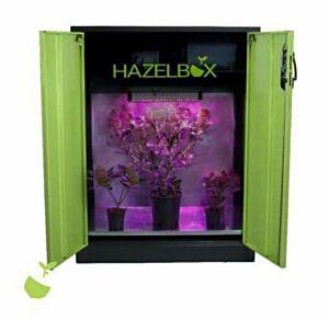 Hazelbox Compact (grün oder anthrazit)