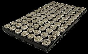 Stecklings-Tray, 3 cm, 84 x Steinwolle-Perlite