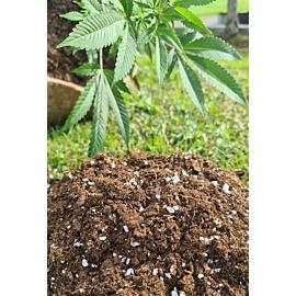 Planta Plus Organic Power Mix mit Perlite 50 Liter